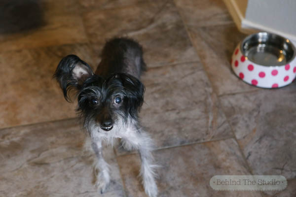 Choosing the right formula for your dog - #ProPlanPet #ad