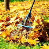 Tips for Keeping Your Yard in Tip-Top Shape image 3